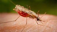 zašto komarci grizu
